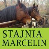Stajnia Marcelin